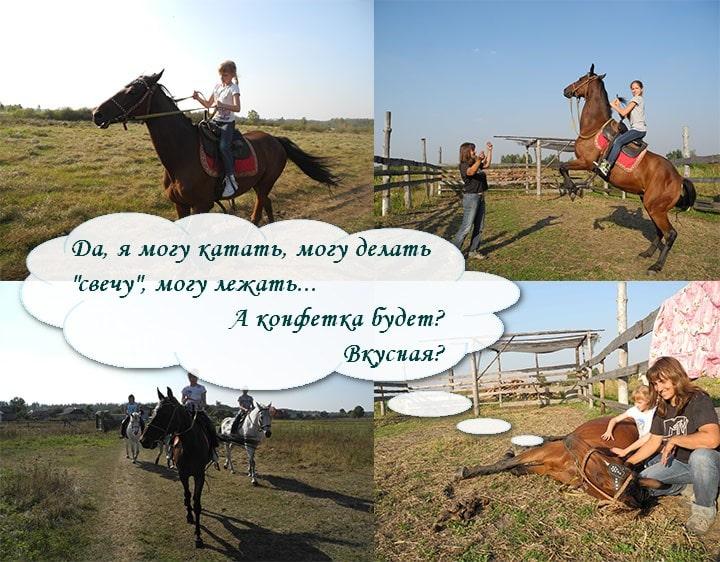Анекдоты Лошади