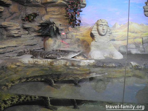 Крокодиляриум в ялте крокодилы нила