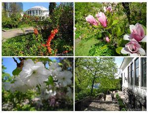 Красивые места киева: о моей прогулке в ботаническом саду фомина